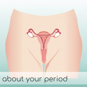 About Your Period